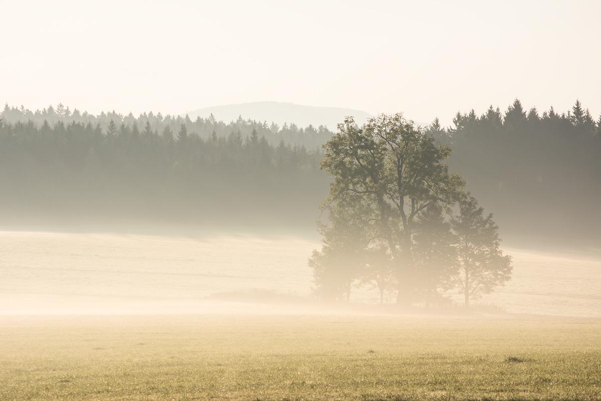 Baum im Nebel - Sonnenaufgang