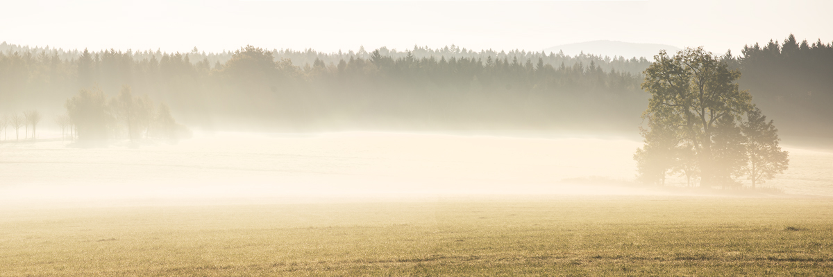 Panorama Baum im Nebel - Sonnenaufgang